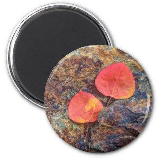Autumn leaf on rock, California 6 Cm Round Magnet