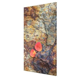 Autumn leaf on rock, California Canvas Print