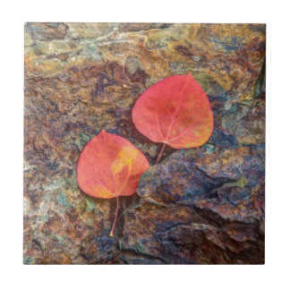 Autumn leaf on rock, California Ceramic Tile