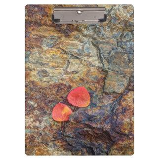 Autumn leaf on rock, California Clipboard