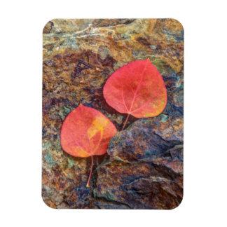 Autumn leaf on rock, California Rectangular Photo Magnet