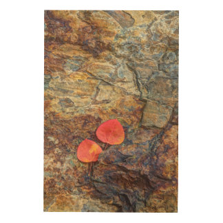 Autumn leaf on rock, California Wood Wall Art