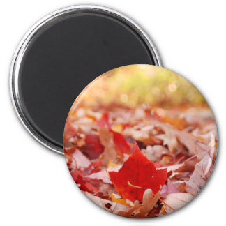 Autumn Leaf Pile Magnets