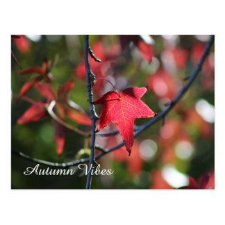 Autumn leaf post card -beautiful nature photograph