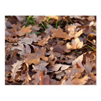 autumn leaf postcards