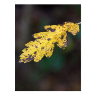 Autumn leaf post card