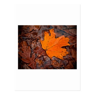 Autumn Leaf Post Cards