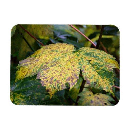 Autumn leaf vinyl magnet
