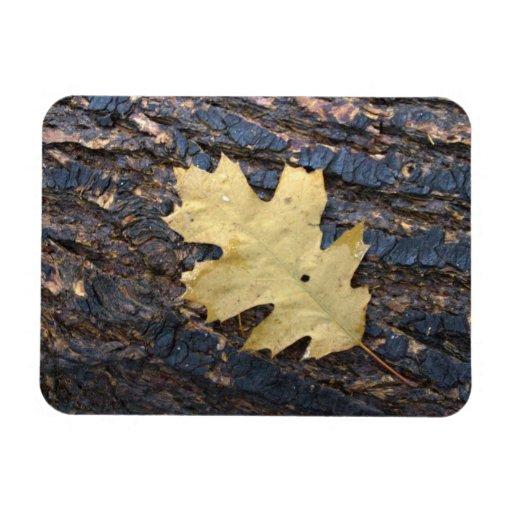 Autumn leaf rectangle magnet