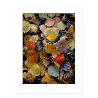 """Autumn Leaf Puzzle"" Postcard"
