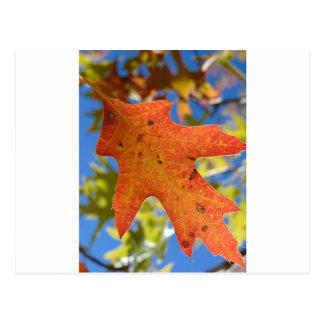 Autumn Leaf Up Close Postcard