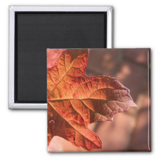 Autumn Leaf V2 Square Magnet