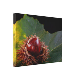 Autumn Leaf with Acorn Wrapped Canvas Print