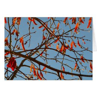 Autumn leafs greeting card