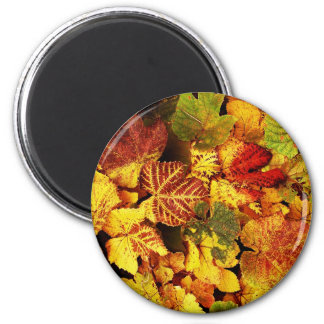 Autumn Leafs natural natural Green Trees Earth Be Magnets