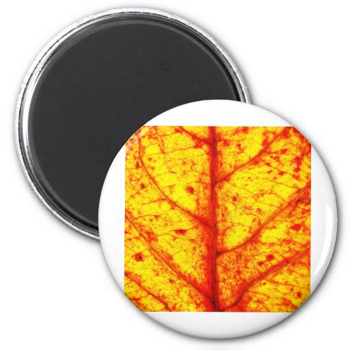 Autumn Leafs natural natural  Green Trees Earth Be Refrigerator Magnet