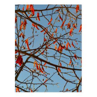 Autumn leafs postcards