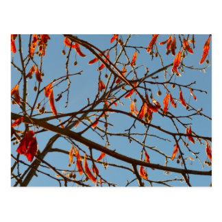 Autumn leafs postcard