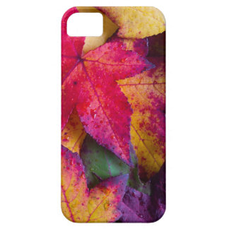 Autumn Leaves #2 iPhone 5 Covers
