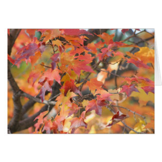 Autumn Leaves 3 Card
