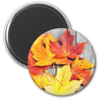 Autumn Leaves 6 Cm Round Magnet