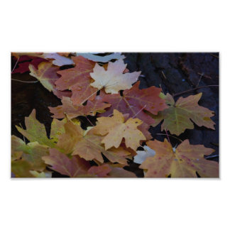 autumn leaves all around photo print