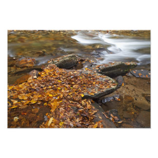 Autumn leaves along Looking Glass Creek in the Photo
