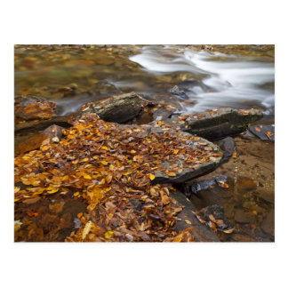 Autumn leaves along Looking Glass Creek in the Postcard