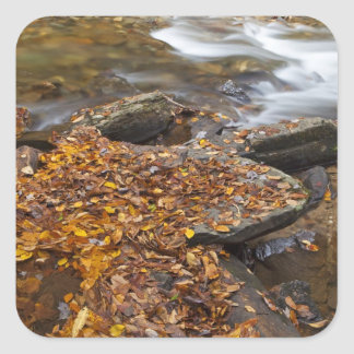 Autumn leaves along Looking Glass Creek in the Square Sticker