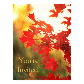 Autumn Leaves and Golden Sun Anything Postcard