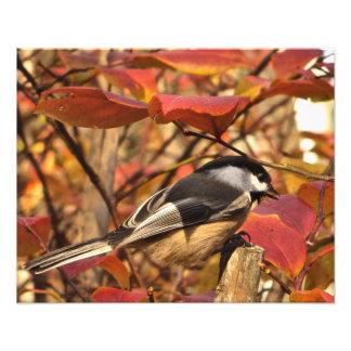 Autumn Leaves Black White Chickadee Bird Photo