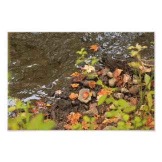 Autumn leaves by the river photo print Niles MI