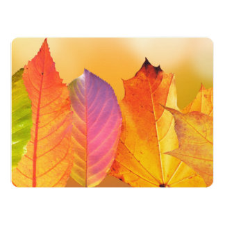 Autumn Leaves Colorful Modern Fine Art Photography Card