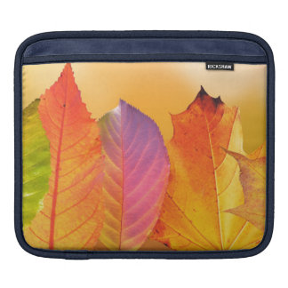 Autumn Leaves Colorful Modern Fine Art Photography iPad Sleeve