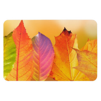 Autumn Leaves Colorful Modern Fine Art Photography Magnet