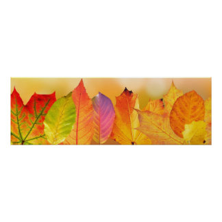 Autumn Leaves Colorful Modern Fine Art Photography Poster