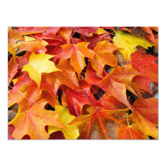 Autumn Leaves Colorful Photography Art Prints Photo