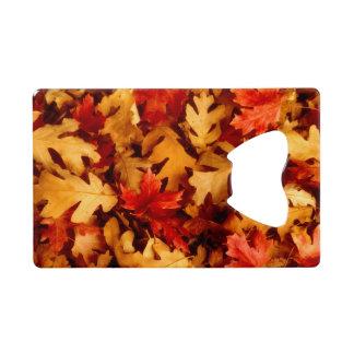Autumn Leaves - Fall Color