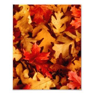 Autumn Leaves - Fall Color Art Photo