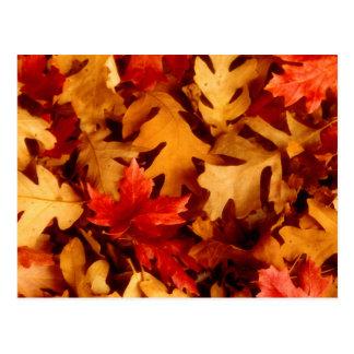 Autumn Leaves - Fall Color Postcard