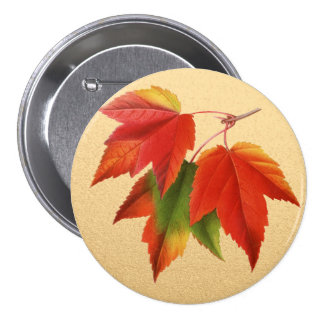 Autumn Leaves Fall Colors Maple Leaf on Gold 7.5 Cm Round Badge