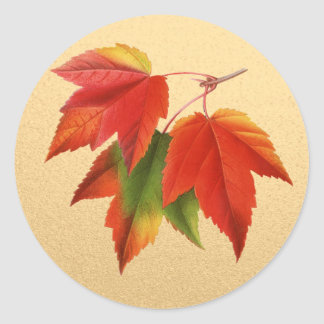 Autumn Leaves Fall Colors Maple Leaf on Gold Round Sticker