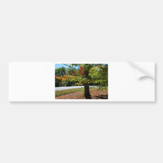 Autumn Leaves in Maine Bumper Sticker