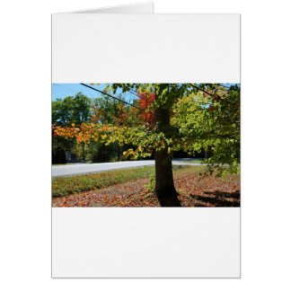 Autumn Leaves in Maine Card