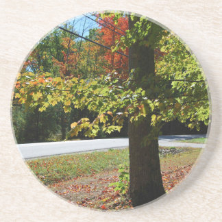 Autumn Leaves in Maine Coaster