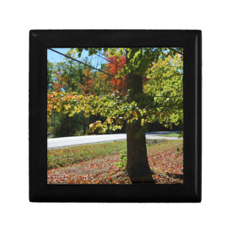 Autumn Leaves in Maine Gift Box
