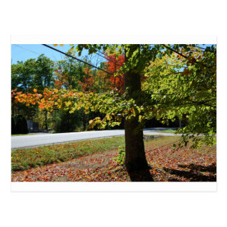 Autumn Leaves in Maine Postcard