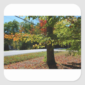 Autumn Leaves in Maine Square Sticker