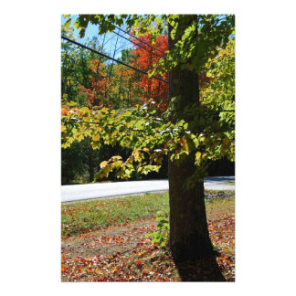 Autumn Leaves in Maine Stationery