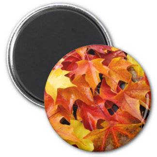 Autumn Leaves magnets Colorful Fall Tree Leaf